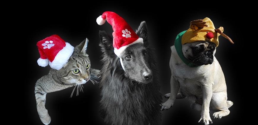 Mützen für Haustiere